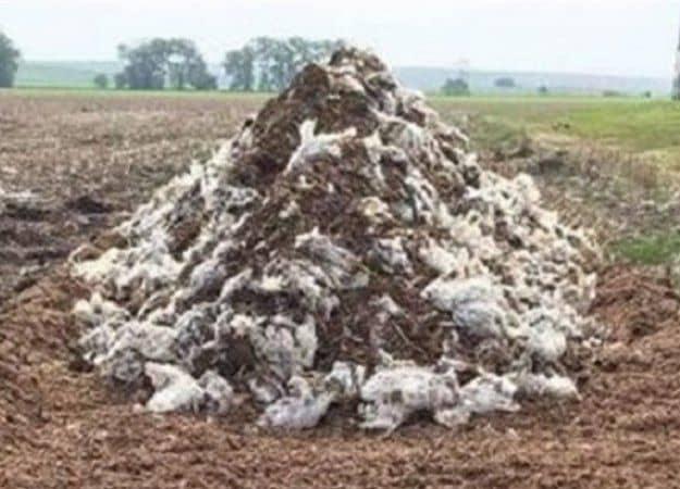 معدوم سازی یک محموله مرغ و دو راس گاو در شهرستان کوهدشت: