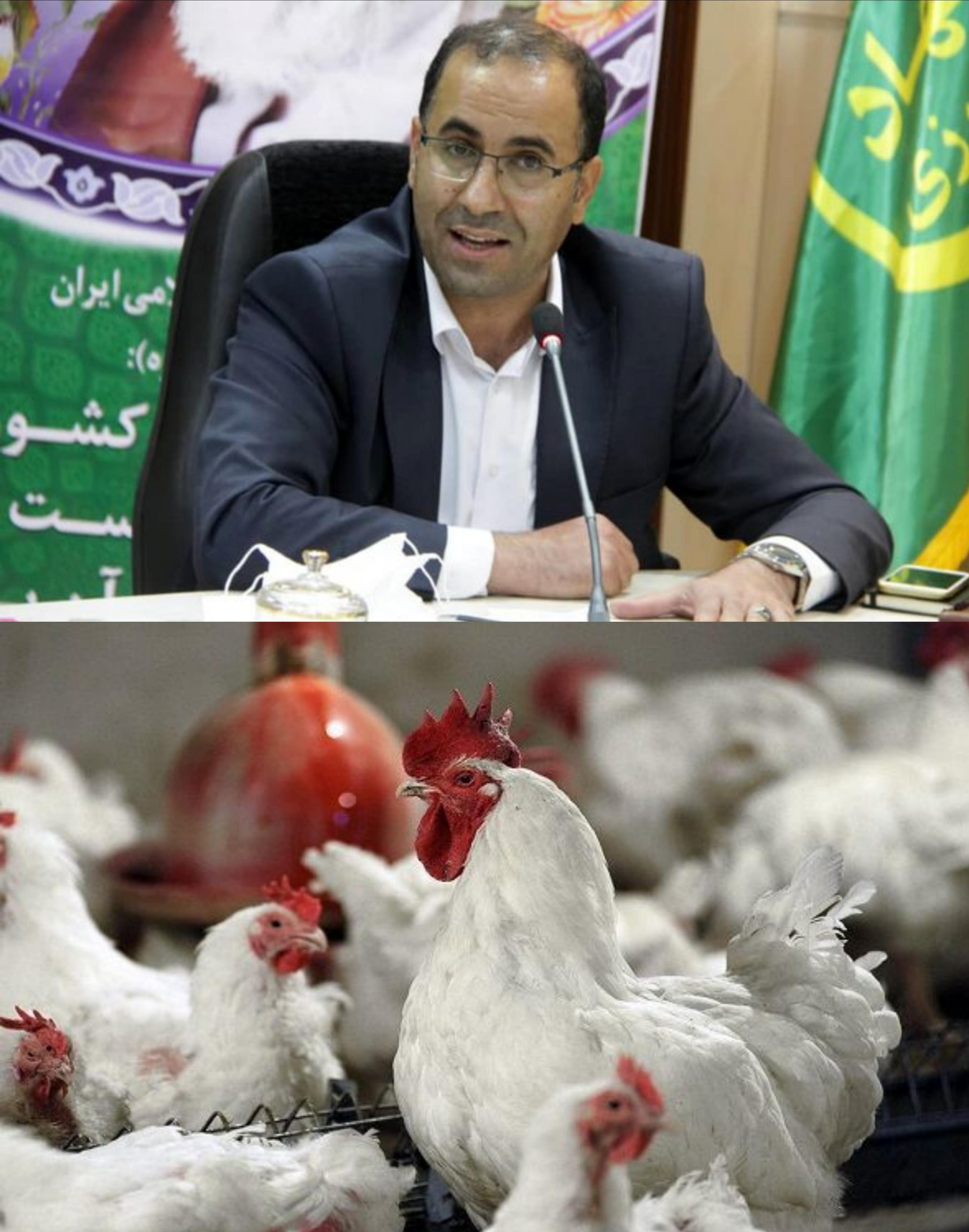 پیشبینی تولید ۵۷۰۰ تُن مرغ در ماه مبارک رمضان: