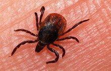 فوت یک نفر بر اثر تب کریمه کنگو در کرمانشاه