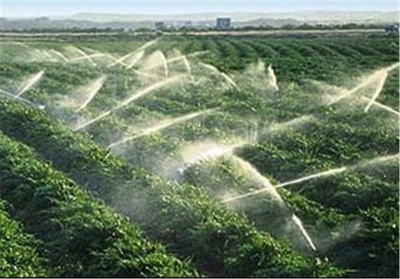 کشت محصولات آبدوست بهاره در شهرستان کوهدشت ممنوع شد
